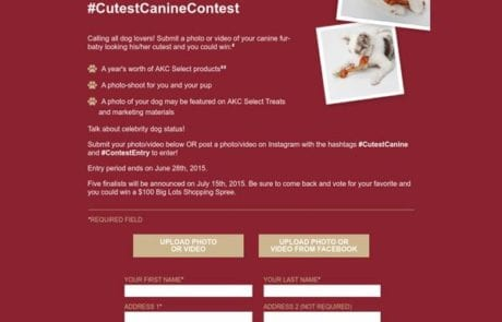 Cutest Canine Contest