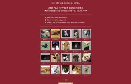 Dogs on Landing Page